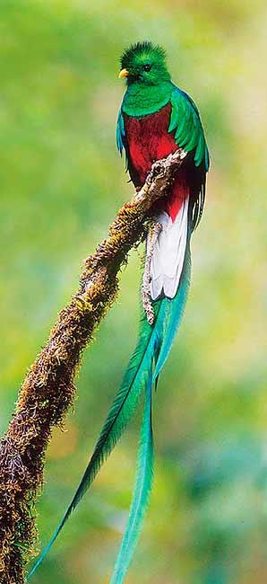 Cékoilabébête ? Quetzal298x650