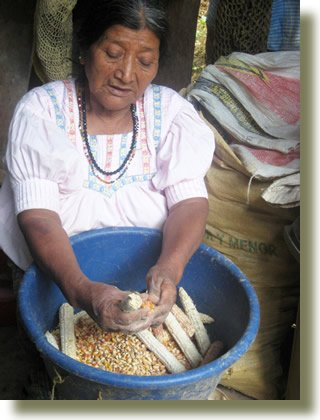Preparing corn for the grinder, a daily job